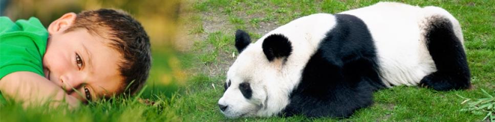 Create a Panda Habitat for Sensory Under Responders